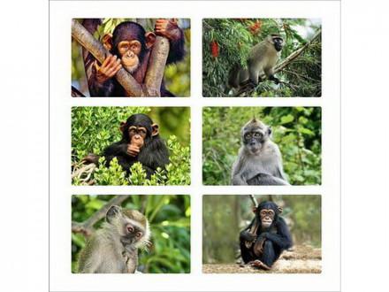 Доска разделочная стекло 20х30см обезьянка фото